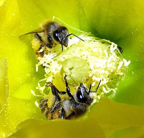 629px-Creation-Via-Pollination